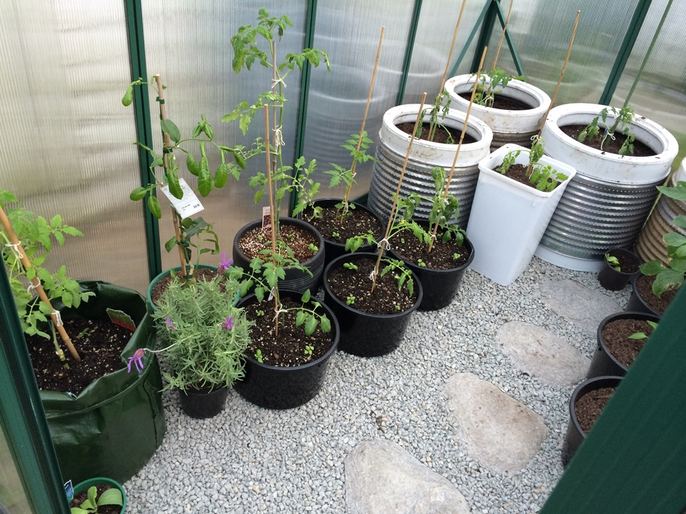 potted plants in a greenhouse australia